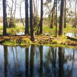 Rašeliniště v Padrťském údolí